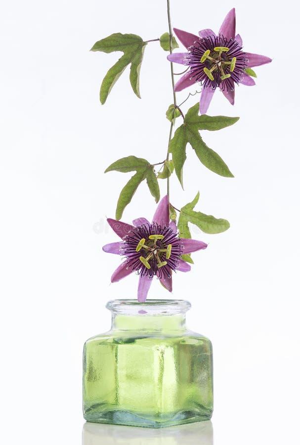 Wiszący Pasyjny kwiat obraz stock