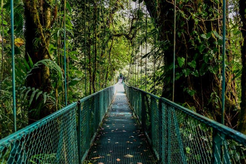 Wisz?cy mosty w Cloudforest, Monteverde -, Costa Rica obraz stock