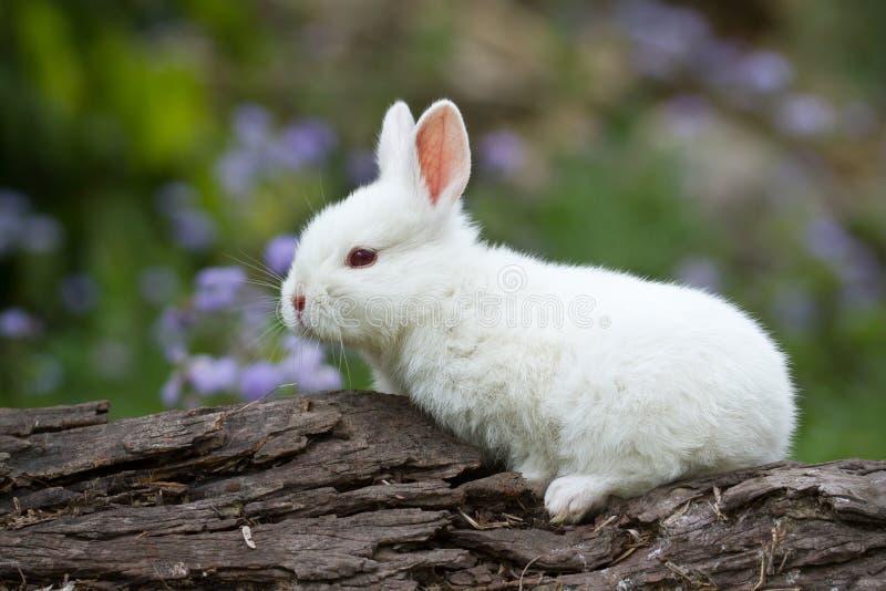 Wit babykonijn op boomstam stock afbeelding