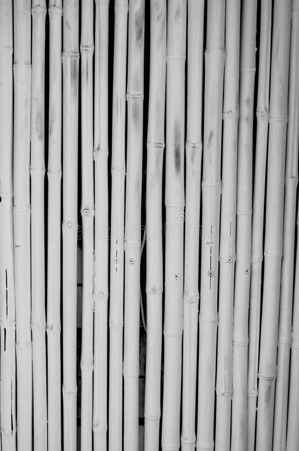 Wit bamboe royalty-vrije stock afbeelding