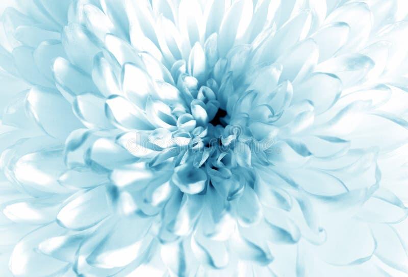 Wit - blauwe bloemclose-up royalty-vrije stock afbeeldingen