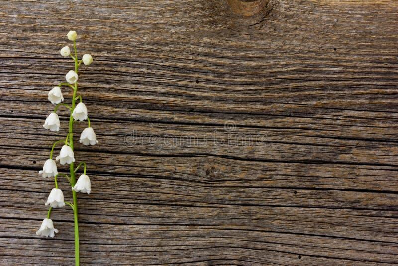 Wit bloemlelietje-van-dalen op een achtergrond van de oude grijze barsten van de schuurraad royalty-vrije stock foto's