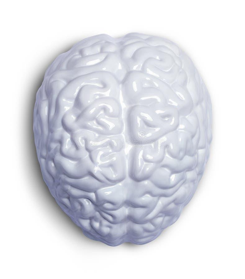 Wit Brain Top royalty-vrije stock foto