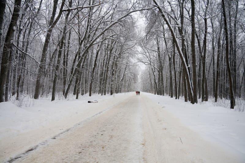 Wit de winterlandschap met bosweg royalty-vrije stock foto