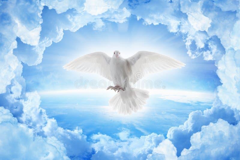 Wit duifsymbool van liefde en vredesvliegen boven aarde stock foto's