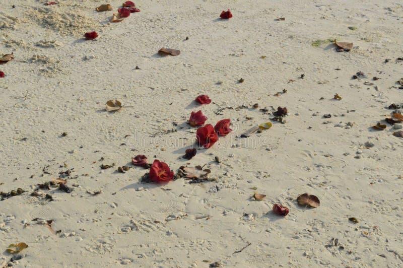 Wit geschuurd strand met bloemen royalty-vrije stock foto's