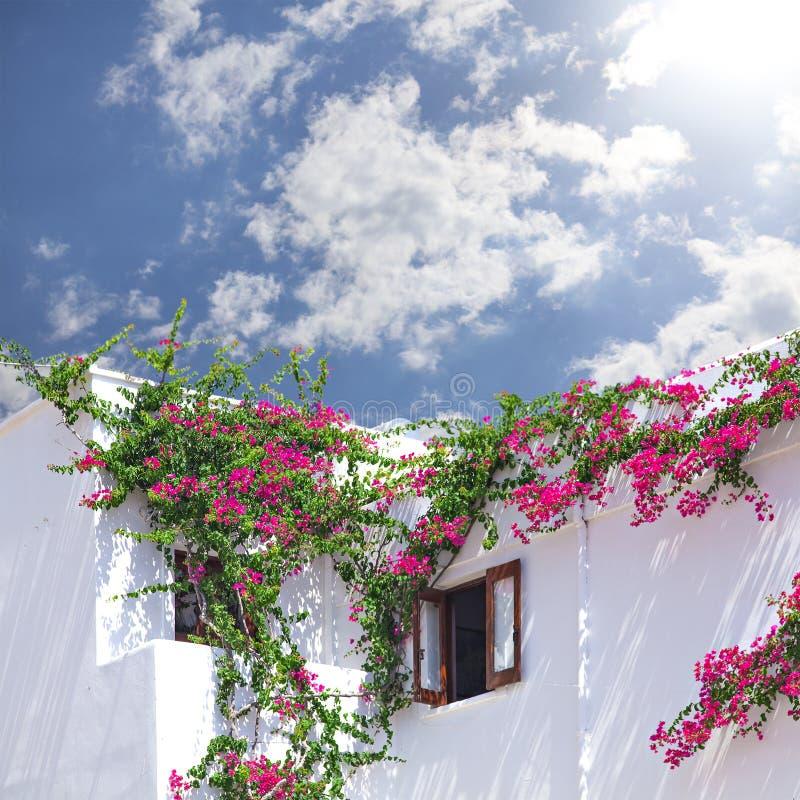Wit gewassen huis met bouganevillea stock fotografie
