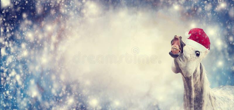 Wit grappig Kerstmispaard met Kerstmanhoed die en camera op de achtergrond van de wintersneeuwvlokken, banner glimlachen onderzoe stock afbeeldingen