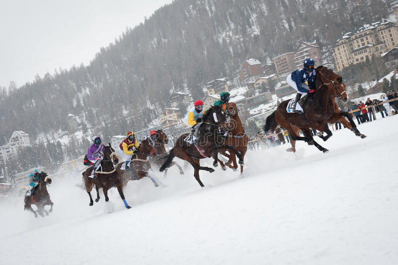Wit Gras in St. Moritz, Zwitserland royalty-vrije stock foto