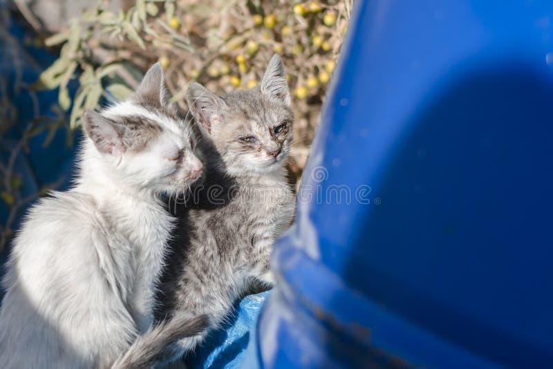 Wit-grijs klein hongerig dakloos katje twee met soured ogen dichtbij het blauwe vat in Athene, Griekenland stock foto's