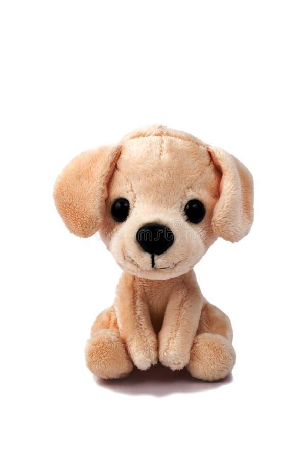 Wit hondstuk speelgoed stock foto's