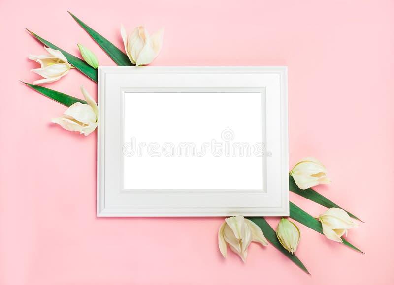 Wit houten kader op roze achtergrond die met groene bladeren, lege ruimte voor een tekst wordt verfraaid De hoogste vlakke mening stock foto