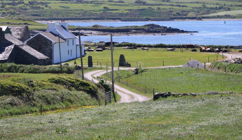 Wit huis door het overzees, Dingle Schiereiland, Ierland stock foto's