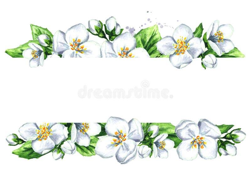 Wit jasmijnmalplaatje Waterverfhand getrokken die illustratie op witte achtergrond wordt geïsoleerd vector illustratie