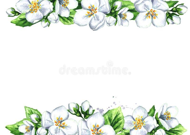 Wit jasmijnmalplaatje Waterverfhand getrokken die illustratie, op witte achtergrond wordt geïsoleerd vector illustratie