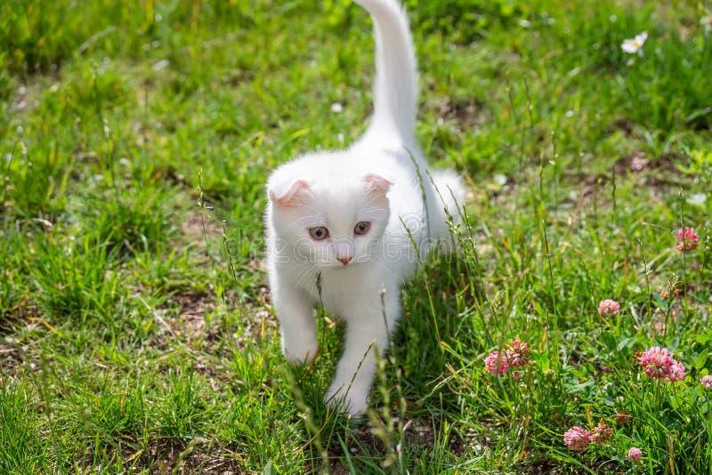 Wit katje op het gras royalty-vrije stock fotografie