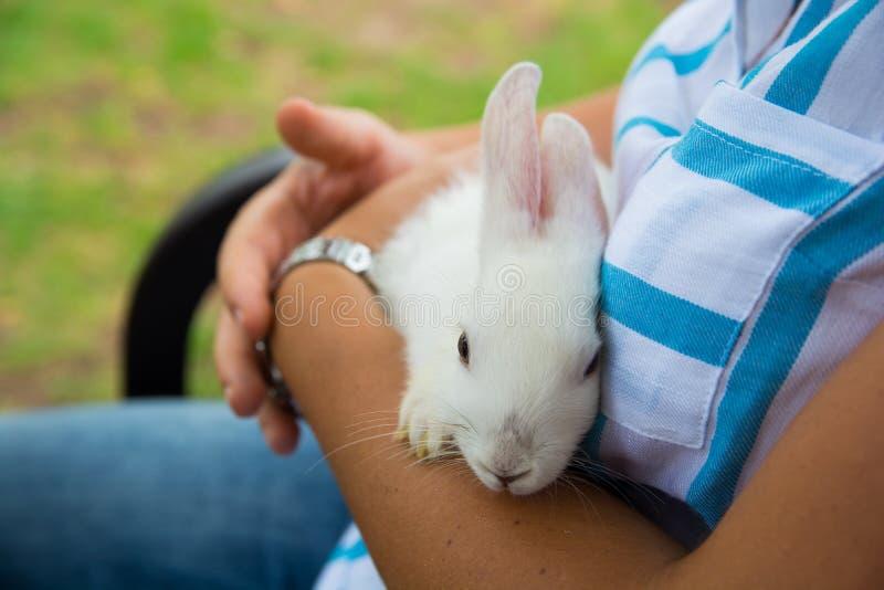 Download Wit konijn stock foto. Afbeelding bestaande uit agent - 107700636