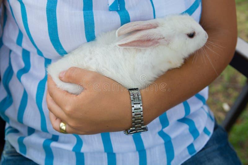 Download Wit konijn stock foto. Afbeelding bestaande uit hand - 107700786