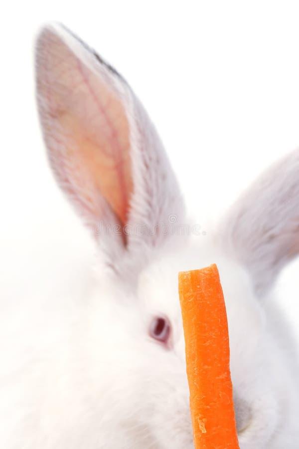 Wit konijn en een wortel stock foto's