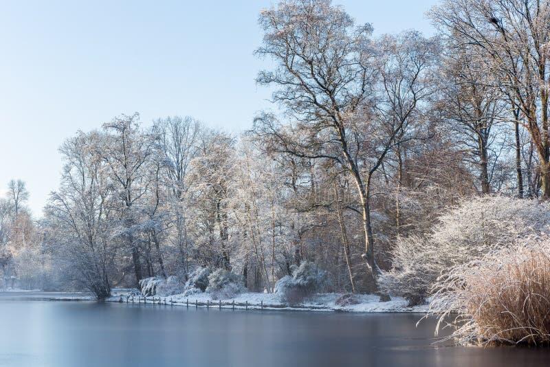 Wit landschapslandschap die oever van het meer van een bevroren vijver en een sneeuw op bomen tonen stock foto's