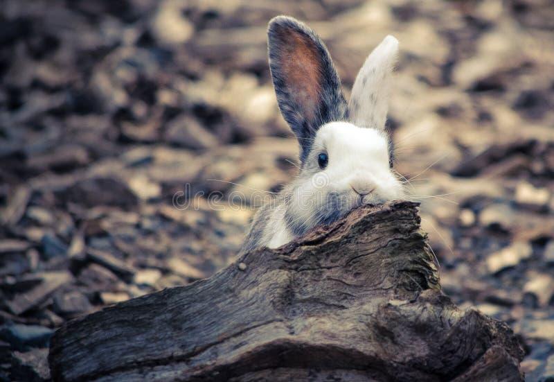 Wit leuk bemoeiziek konijn royalty-vrije stock foto