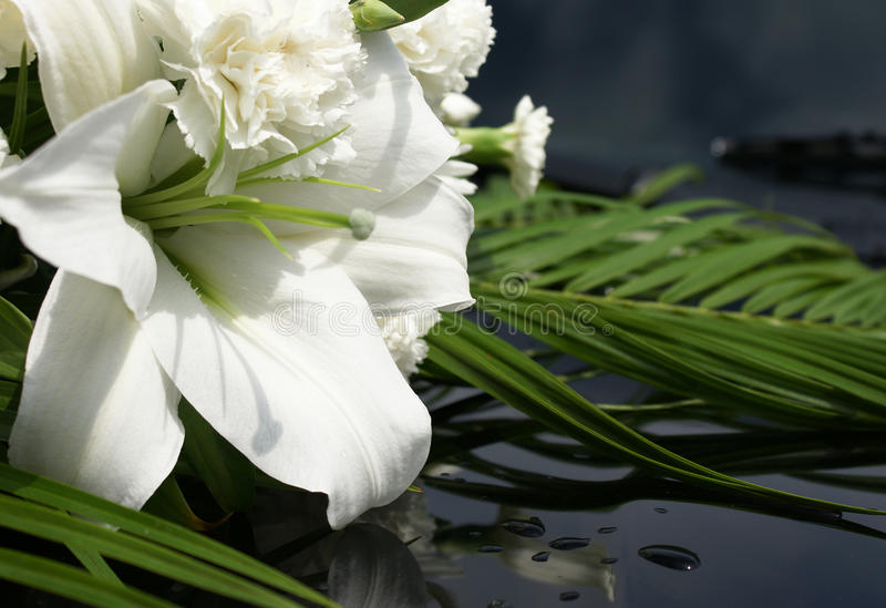 Wit lilly royalty-vrije stock fotografie