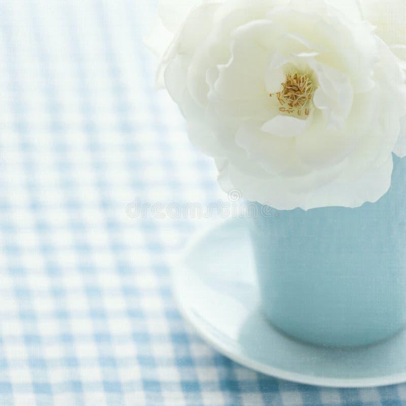 Wit nam in een lichtblauwe vaas toe stock afbeeldingen