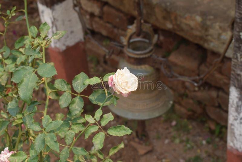 Wit nam in Nepal toe stock afbeeldingen