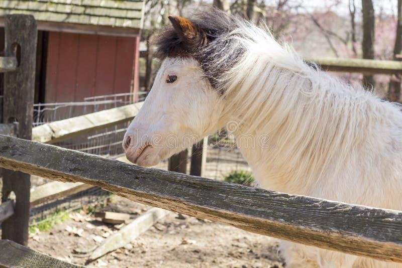Download Wit paard stock foto. Afbeelding bestaande uit up, geschilderd - 54092188