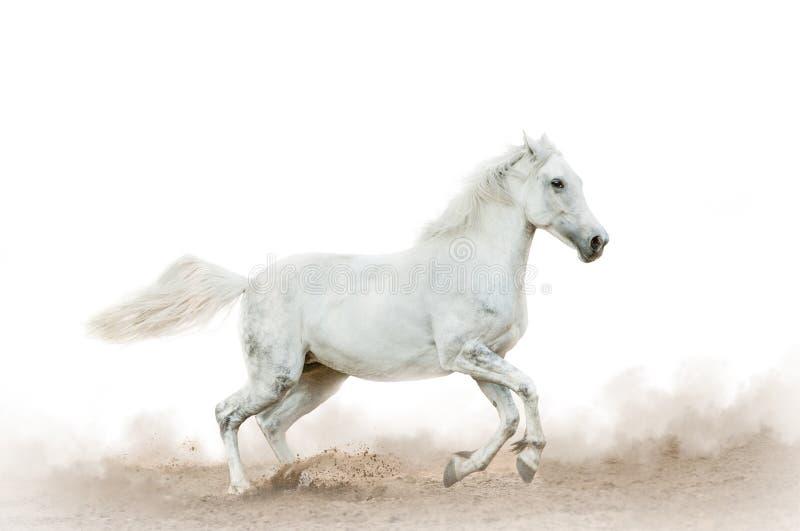 Wit paard in het stof over een wit royalty-vrije stock afbeelding