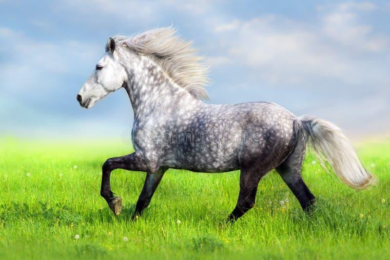 Wit paard met lange manen stock foto's