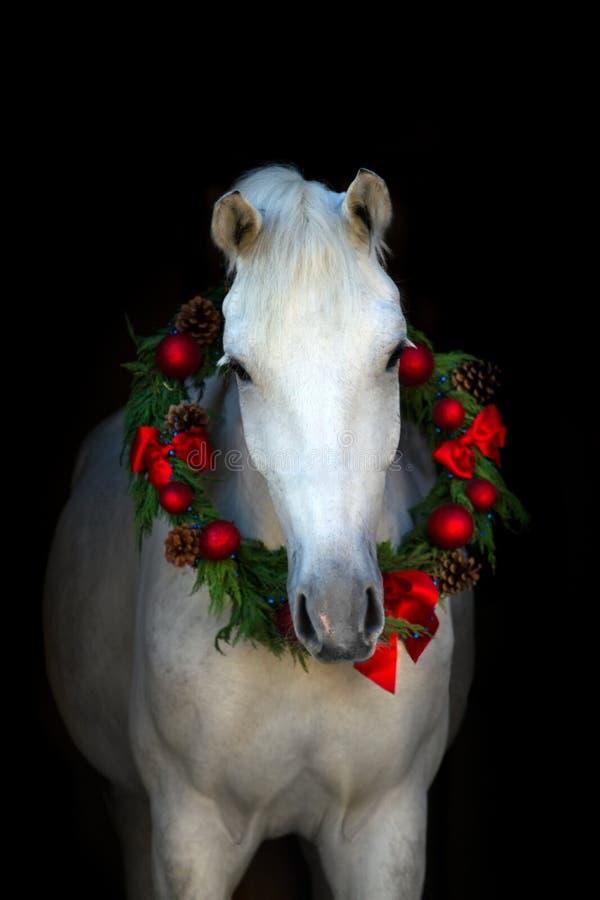 Wit paard op zwarte royalty-vrije stock foto