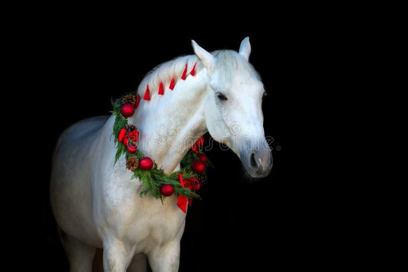 Wit paard op zwarte royalty-vrije stock afbeelding