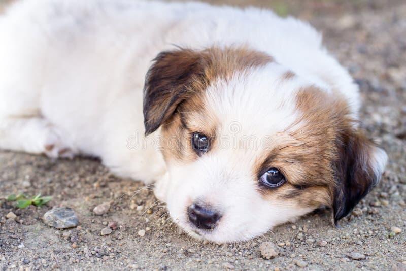 Wit puppy royalty-vrije stock afbeeldingen