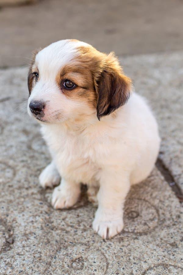 Wit puppy royalty-vrije stock fotografie