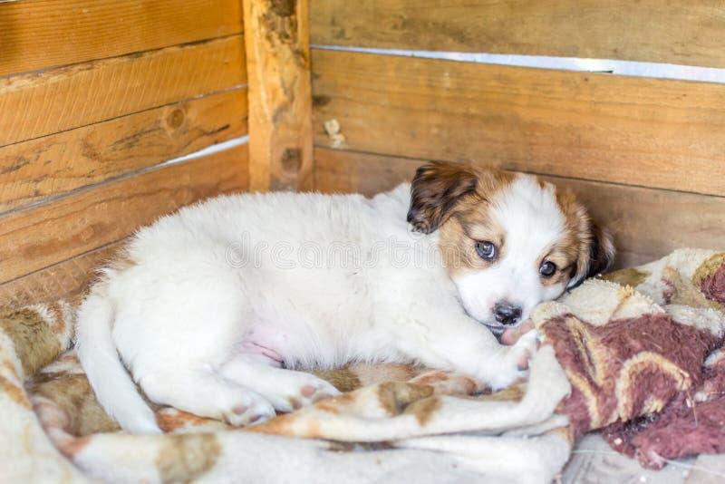 Wit puppy stock afbeeldingen