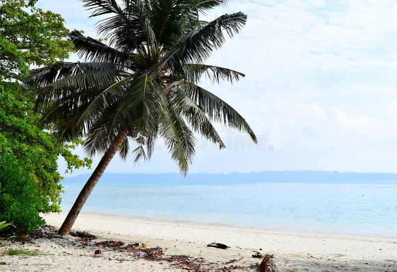 Wit Sandy Beach met Blauw Water met een Hoekig Kokospalm en een Groen - Vijaynagar, Havelock, Andaman Nicobar, India stock afbeelding