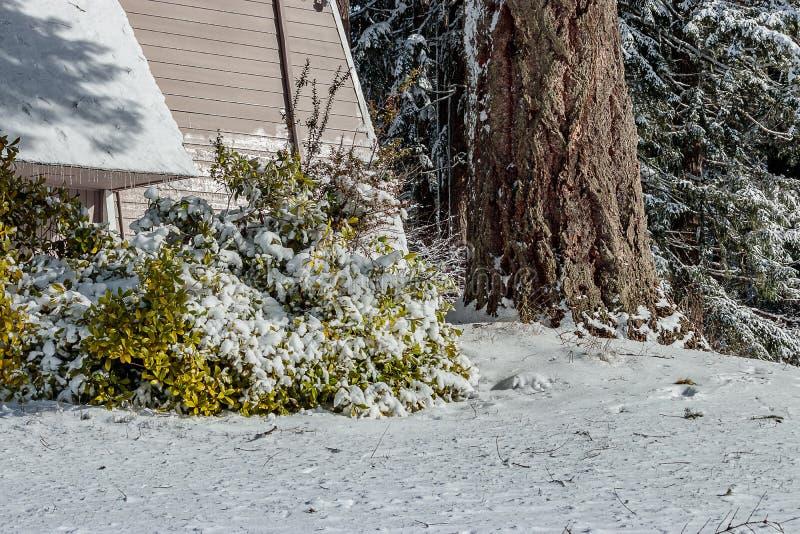 Wit sneeuw behandeld landschap dichtbij een gebouw stock afbeelding