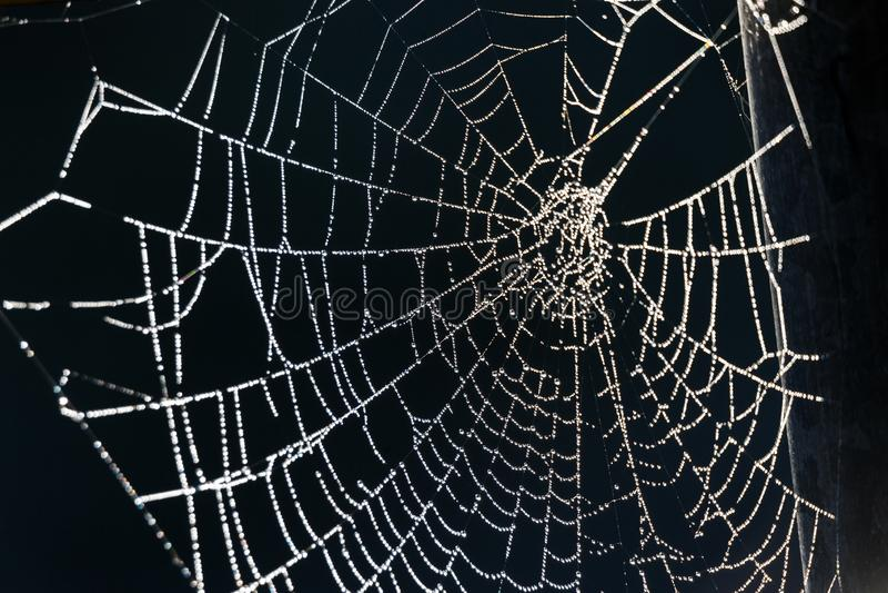 Wit spinneweb royalty-vrije stock foto