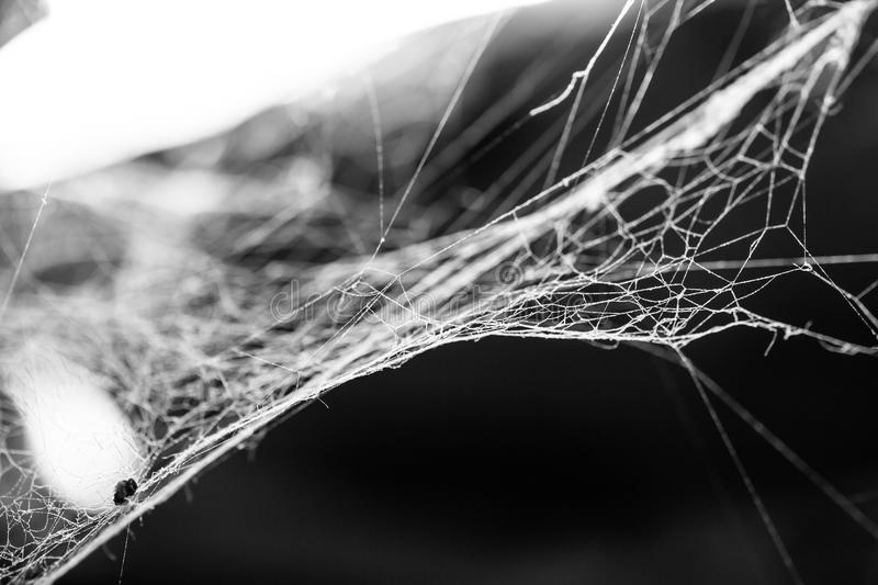 Wit stoffig spinneweb, enge donkere achtergrond op een zonlicht stock foto's