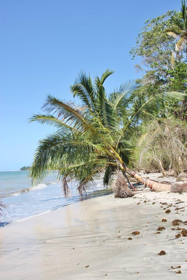 Wit strand met het vallen onderaan palm naast het overzees royalty-vrije stock afbeeldingen