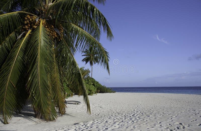 Wit Strand, Pam boom, Blauwe Hemel, Oceaan, de Maldiven stock afbeelding
