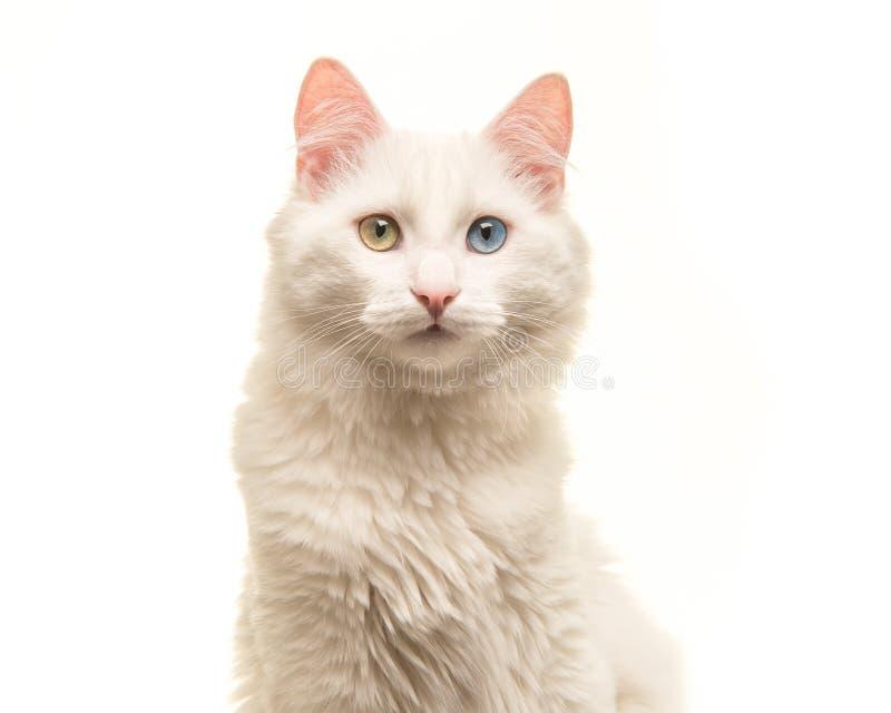 Wit Turks angora kattenportret die de camera bekijken stock foto