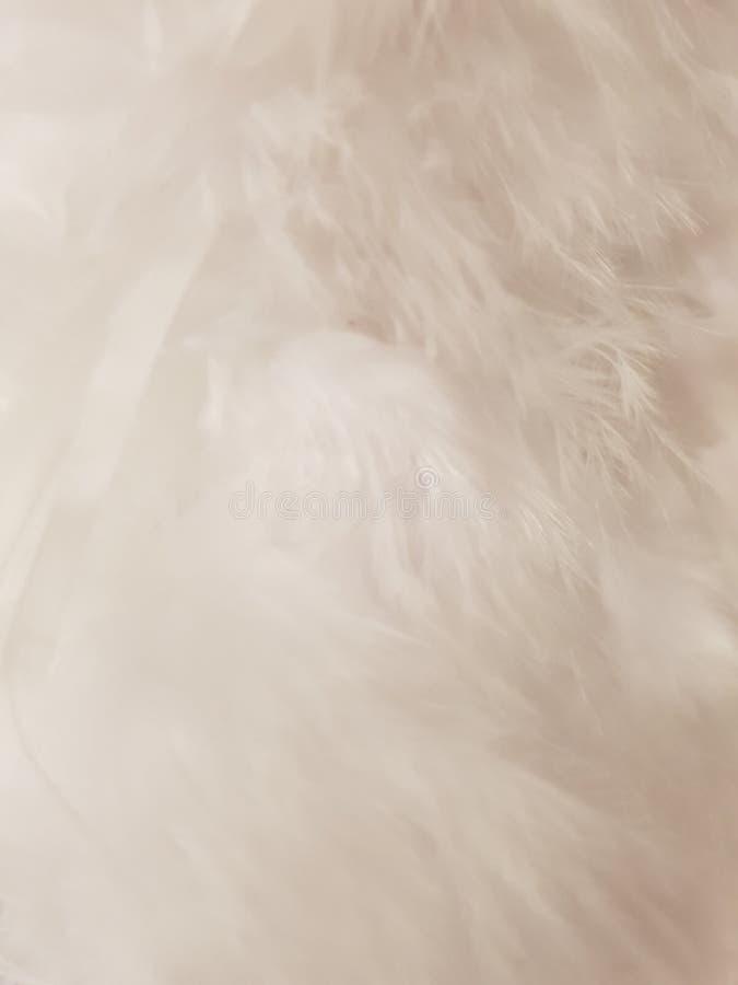 Wit veer achtergrondtextuurgevederte royalty-vrije stock foto