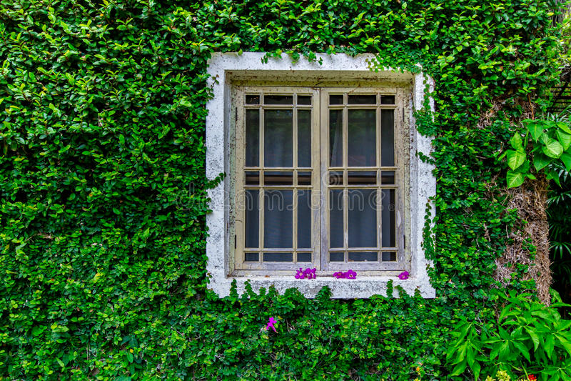 Wit venster stock fotografie