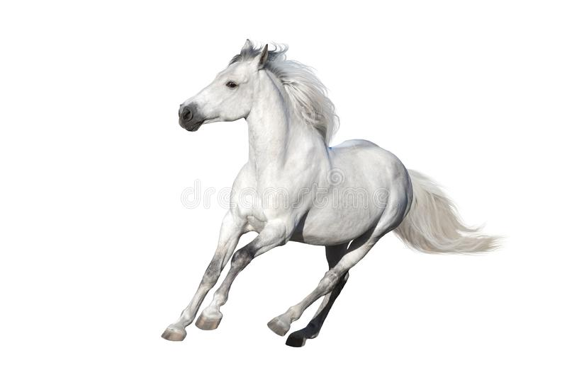 Wit verwijderd paard royalty-vrije stock afbeelding