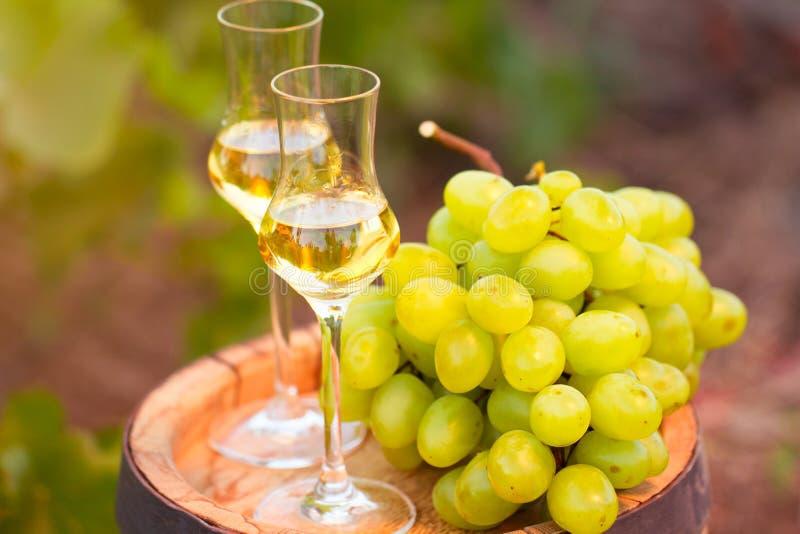Wit wijnglas, jonge wijnstok en bos van druiven tegen groen stock fotografie