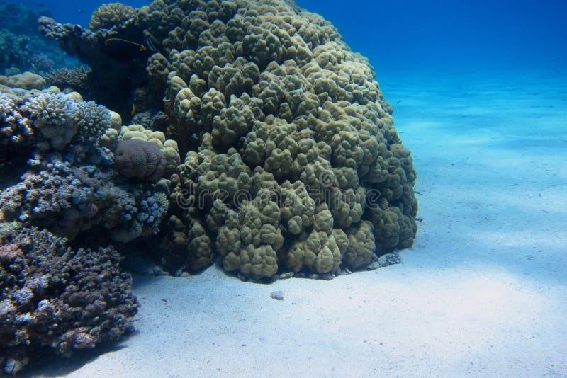 Wit zand en kleurrijk koraal stock foto's