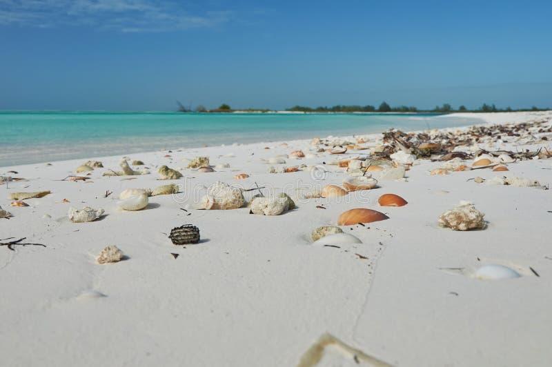 Wit zand met zeeschelpen op het strand van het Caraïbische overzees royalty-vrije stock afbeeldingen