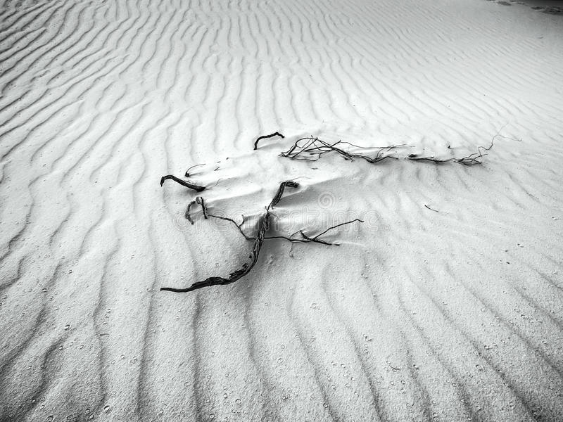 Wit Zand - Woestijn in Zwart & Wit royalty-vrije stock foto